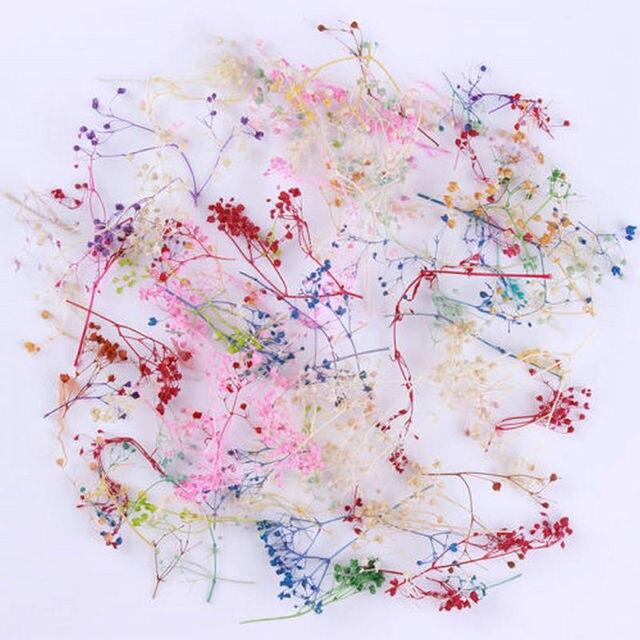 10 pièces mixte fleurs séchées décoration Art des ongles bricolage 10 couleurs sec fleur manucure décoration pour UV Gel acrylique ongles Art conseils