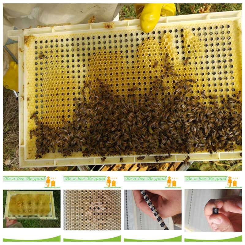 One Complete CQR-3C Queen Rearing System for Queen Rearing And Royal Jelly Producing, New Design Beekeeping Tool