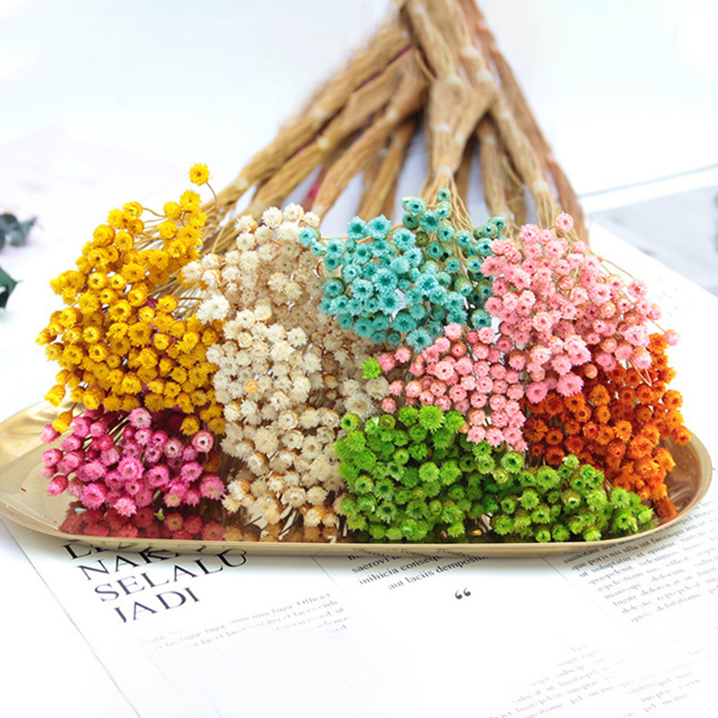 50pcs Natural Simulation Flowers Imported Ins Dried Flower Bouquet Real Happy Flower Shooting Props Sticky Material Decorative