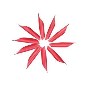 Image 5 - 100 pièces tir à larc Vanes 1.75 pouces spirale plume aile droite bricolage carbone flèche aluminium flèche tir accessoires de chasse