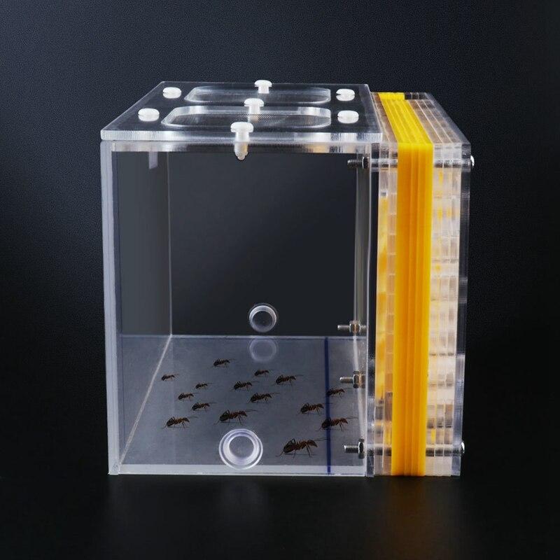 Акриловое Муравьиное гнездо желтого цвета T дизайн DIY с областью кормления Муравьиное гнездо Pet Mania для домашние муравьи коробка
