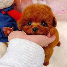 1 шт. электрические игрушки Мягкий реалистический собака плюшевая Тедди прогулочная светящиеся лающей собаки смешной моделирования, перем...