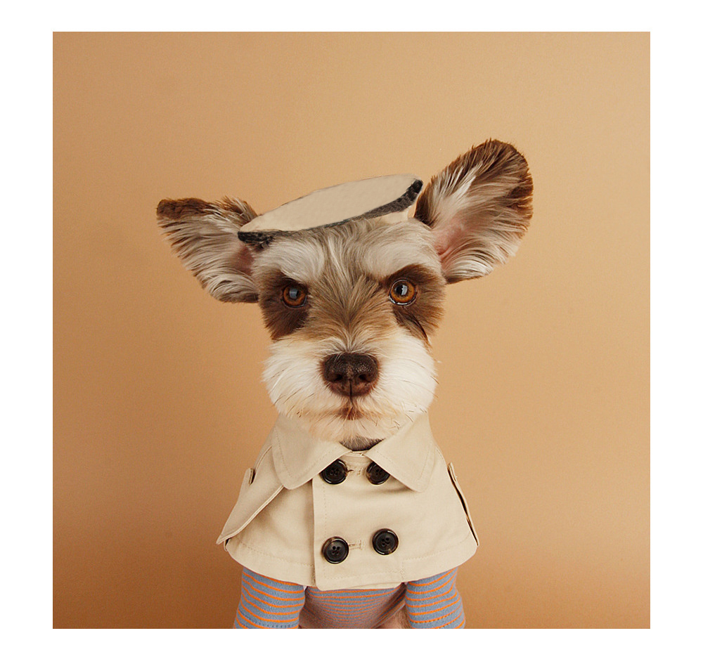 Dog Collar Beige font b Pet b font Bandana Scarf British Style Cloak trench coat Cat