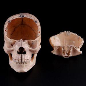 Image 4 - 15 ชิ้น/เซ็ต 4D ถอดสีกะโหลกกายวิภาครุ่นที่ถอดออกได้การสอนการแพทย์เครื่องมือ