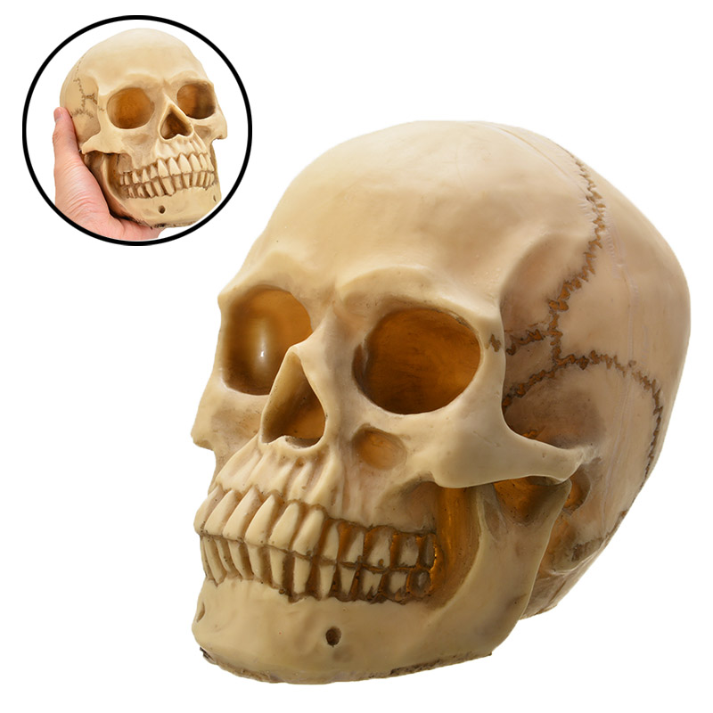 Halloween Resin Replica Skull Realistic Life Size 1:1 Human Anatomy Halloween Carnival Cosplay Decor Statues Sculptures Ornament