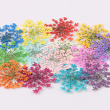 Craft Pendant Pressed Flower-Plant Diy-Accessory Dried Artificial Dry-Making Home-Decorations