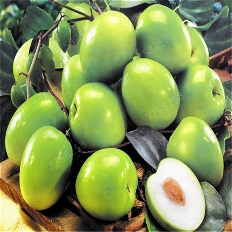 10 Pcs Jujube Penzai Chinese Taiwan Big Jujube Penzai Fruit Tree Penzai Rare Tropical Fruit Penzai DIY Home Garden Potted Plant