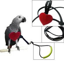 New Parrot Bird Leash Flying Training Rope Straps Parrot Cockatiels Starling Budgie Elastic Training Ostrich Rope(China)