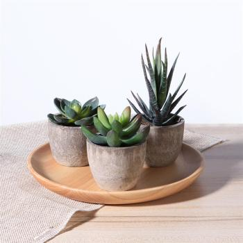 3 Succulent Artificial Plants with Pots Artificial Plants Bathroom Bedroom Departments Dining Room Entryway Living Room Outdoor Rooms