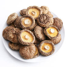 Shiitake Mushrooms Lentinus Edodes Xiang Gu