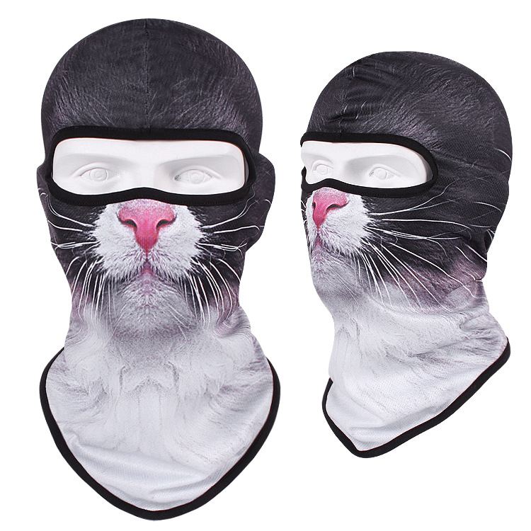 布偶猫.jpg