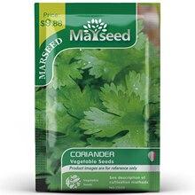 American Heirloom MARSEED Coriander Vegetables Seedsplants Seedling Garden Outdoor
