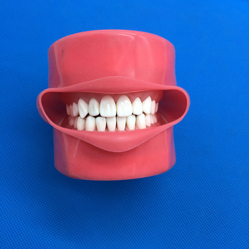 Student Learning Model Dental Phantom Head Teeth Model Silicone Mask With 28 Pieces Screw Fixed Teeth