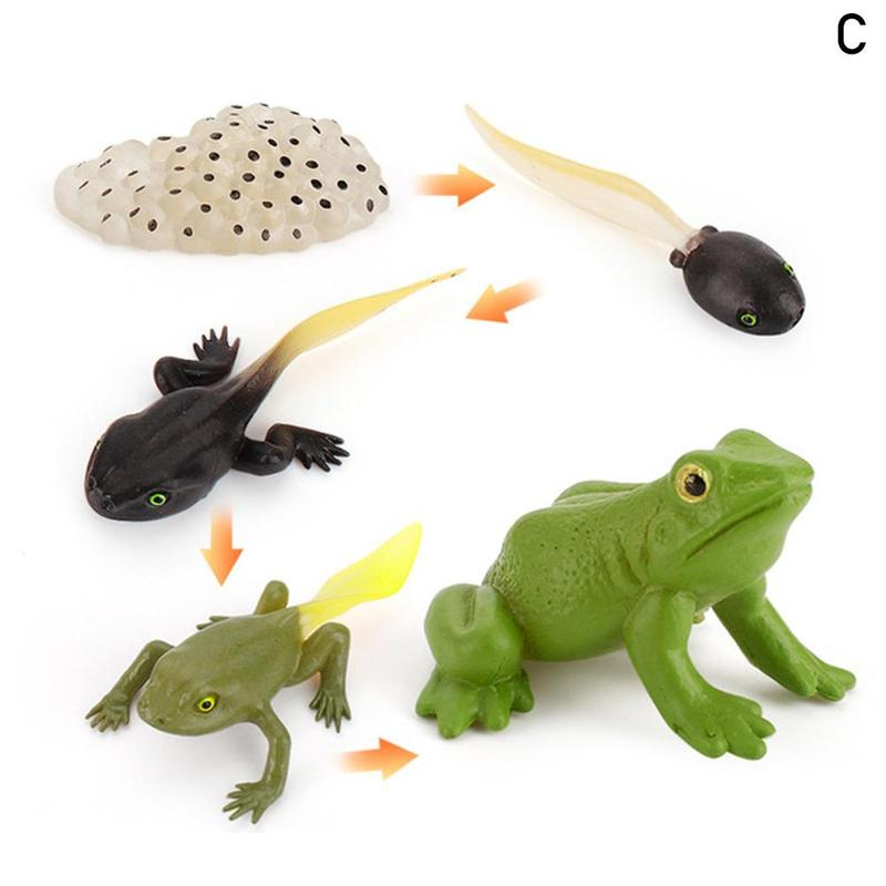 Worker Ant Animals Simulation Nest Growth Chicken Insects Frogs Growth Life Cycle Figurines Model Action Figures Toy For Kids