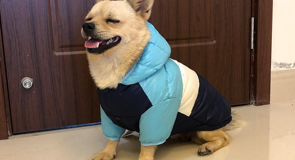 Nueva ropa de invierno para perros, abrigo impermeable con capucha 26