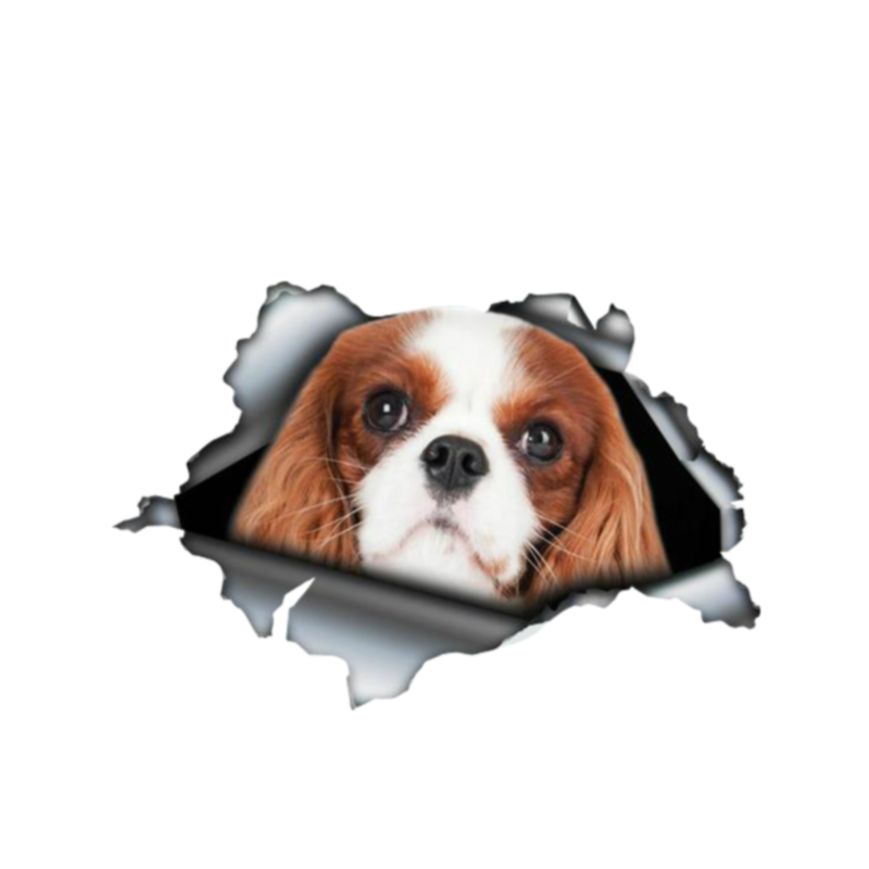 Dawasaru Red Cavalier King Charles Pet Car Stickers Personalized Decal Truck Motorcycle Auto Accessories Decoration PVC,13cm*8cm