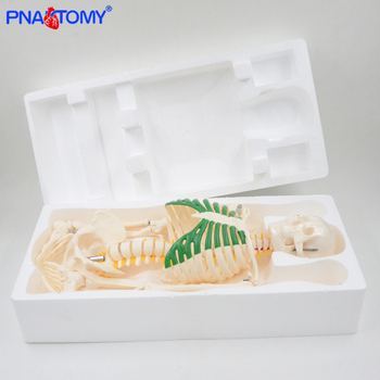 85cm flexible skeleton model with base with nerves detachable arms and legs 1/2 reduced size anatomy model medical teaching tool 85cm skeleton model with nerves system medical teaching educational equipment skeleton anatomy human spine and skull anatomical