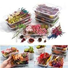 1 kutu karışık gerçek kurutulmuş çiçekler kuru bitkiler preslenmiş çiçekler DIY epoksi reçine takı yapımı kolye kolye el sanatları aksesuarları