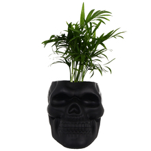 Organizer Skull-Shaped Pencil-Holder-Accessory Desk-Supplies Flower-Pot Home Office Patygr