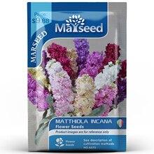 American Heirloom MARSEED Matthiola Incana Flower  Seedsplants Seedling Garden Outdoor