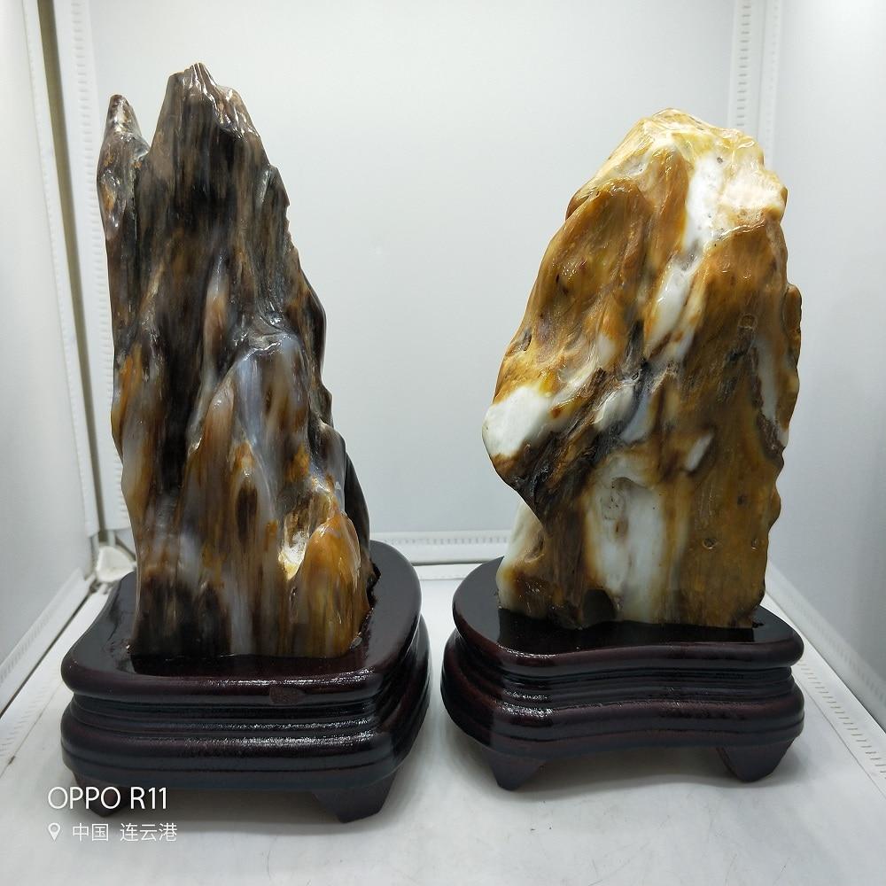 Bois naturel pétrifié cristal fossile arbre Jade pierres insectes fossiles et quartz minéral et bois libre Stand