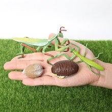 Ciclo de crescimento realista insetos orando mantis brinquedo figura pintado à mão ciclo de vida do mantis modelo brinquedos educativos em miniatura