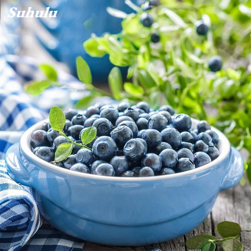 100 BlueBerry Planters For Artificial Flower Green Plant