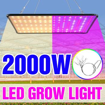 1000W oświetlenie Led do rosnącej zieleni pełne spektrum lampy 1500W 2000W światła Led dla roślin żarówki szklarnie kryty lampa fito rosną namiot US ue UK wtyczka tanie i dobre opinie SPSCL CN (pochodzenie) ROHS High quality plastic 1000W 1500W 2000W LED Grow Light 180mm-295mm Plant Growth Light Czip LED