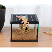 Desert style sphinx reptile tank crystal glass insect box little animal pets feeding cage lizard spider office decor container