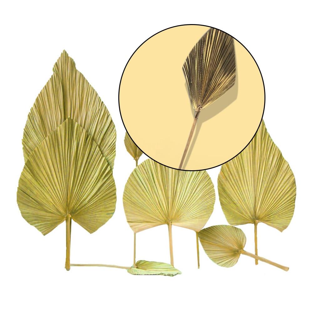 Сушеные Листья священной пальмы, сушеные листья фестона пальмы, Свадебный Стайлинг, мягкое украшение, Космический дисплей, эстетический ди...