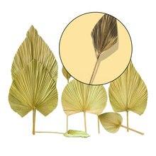 Folhas de palmeira secas secas folhas de palmeira vieira estilo de casamento decoração suave espaço exibir design estético estilo nórdico