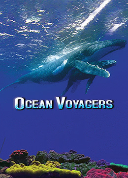 动物星球系列:鲸奇之旅