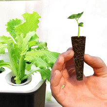 Grow Sponge Seed Starter Pods Without Seeds DIY Nursery Boxes And Cloning Machines Planting Sponge For