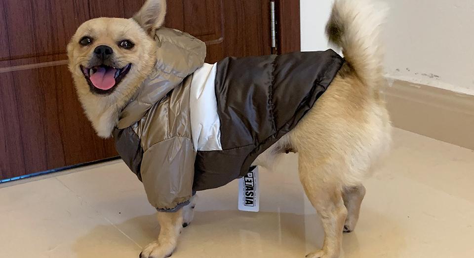 Nueva ropa de invierno para perros, abrigo impermeable con capucha 21