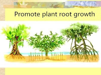500g Plant Rooting Powder Indole Butyric Acid Potassium Plant Growth Regulator 98% Potassium Butylate