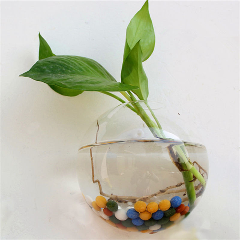 Globe Shaped and Hanging Terrarium Ball and Transparent Glass Pot to Grow Plants Indoor 4