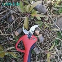 https://ae01.alicdn.com/kf/H28ebe82dd0ad4f78a26238b94da9fccfv/HiSeed-Progressive-40-Professional-Garden.jpg