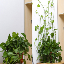 Sticky-Hook-Holder Clip-Plant Wall-Clip Rattan-Clamp Garden-Supplies Fixture-Wall Vines