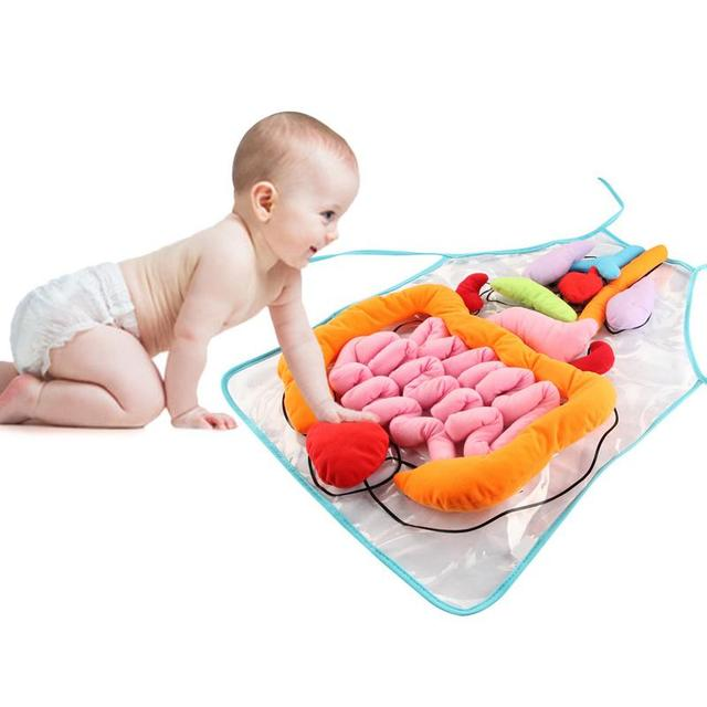 Kids Educational Toy Anatomy Apron  2