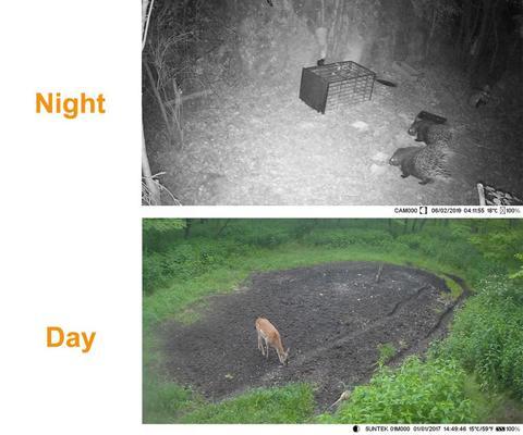 dwireless agua visao noturna selvagem cameras floresta