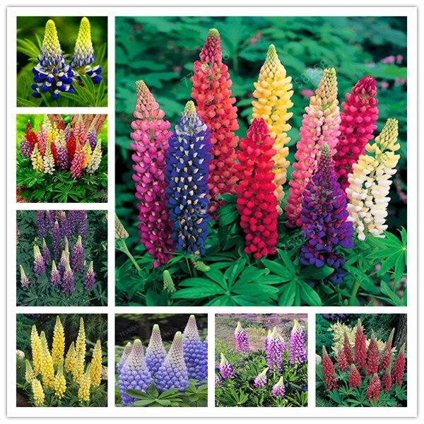 10Pcs 2019 Hot Sale Home Rare Penzai Plants Lu Binghua Perennial Potted Plant Indoor Plant Easy Grow In Pots Penzai Plant Flower
