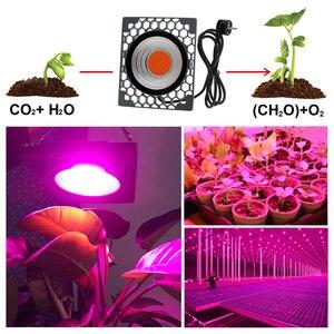 Image 5 - Oświetlenie led do uprawy 500W Full Spectrum wysoka jasność wydajność 50W COB lampy fito na roślina doniczkowa sadzonka rośnie i kwiat