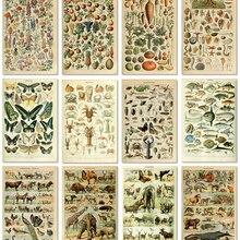 Science-Poster Kraft-Paper Botanical-Picture Mushroom Poster-Print Fruit Vegetable Wall