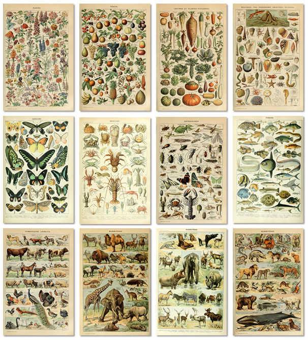 ヴィンテージ野菜果物キノコポスター印刷アンティーク壁アートプリント植物画像科学ポスタークラフト紙