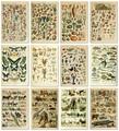 Винтаж овощи фрукты плакат с грибами с изображением старинной кирпичной стены с художественным принтом Ботанический рисунок плакат на нау...