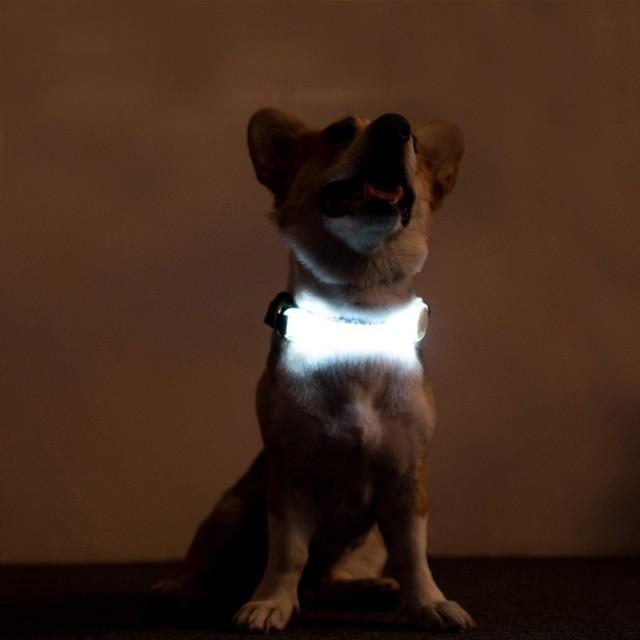 Pet LED Luminous Strap For Dog Multi-functional Glowing Collar 3