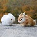 Мини реалистичные милые белые плюшевые кролики мех реалистичные животные пасхальный кролик имитация кролика игрушка модель подарок на ден...