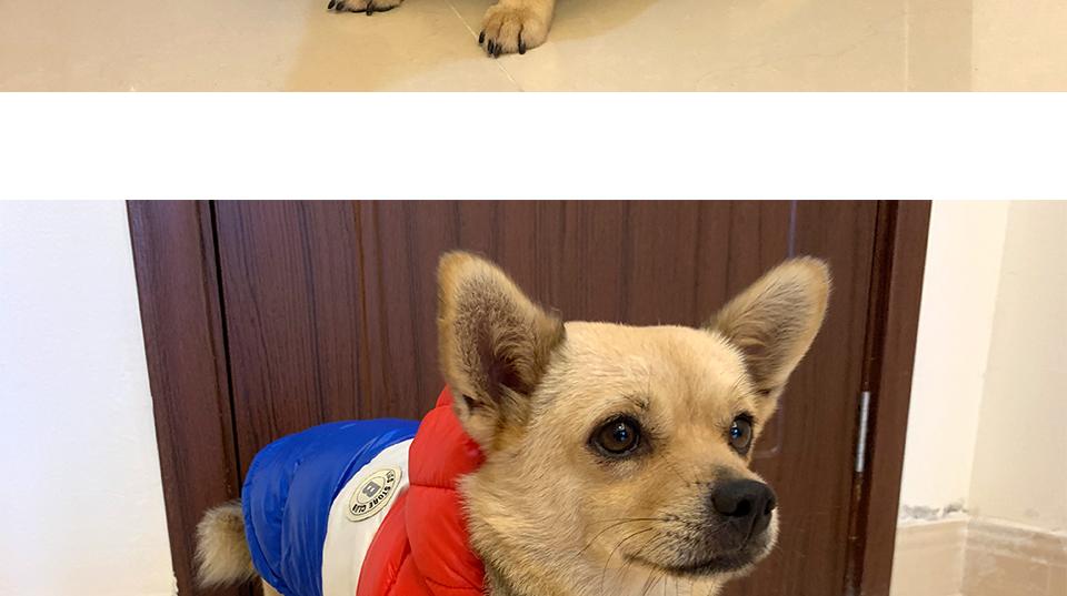 Nueva ropa de invierno para perros, abrigo impermeable con capucha 27