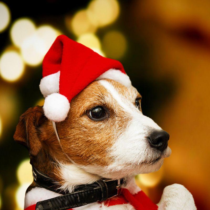 1 шт., новогодняя, Рождественская шляпа для животных, шапка Санта-Клауса для кошек, собак, щенков, рождественские украшения, новогодние