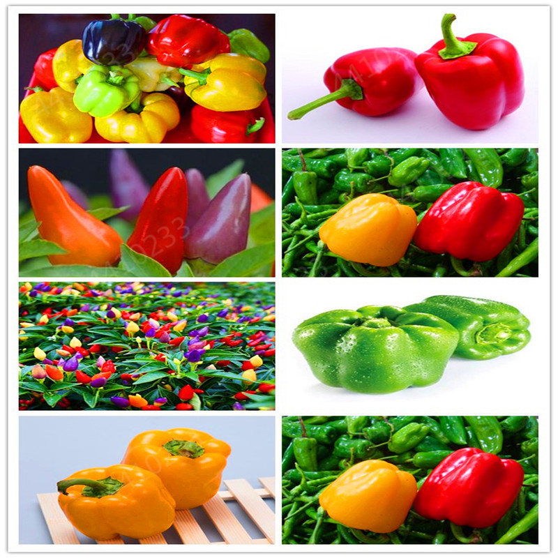 200pcs/bag Gaint Long Chili Red Pepper Bonsai Healthy Vegetable Fruit Bonsai For DIY Home Garden Potted Plants
